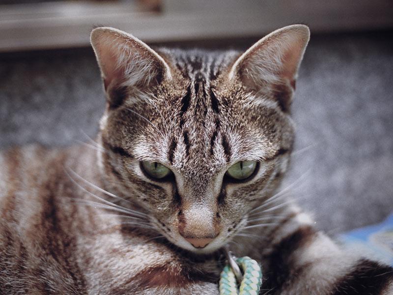 home_animals_photo14